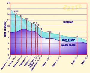( Sleep NREM and REM - Image Courtesy of www.habitot.org )
