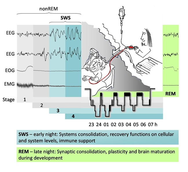( Sleep Monitoring Tests - EEG - EOG - EMG - Image Courtesy of www.ima.org.il )
