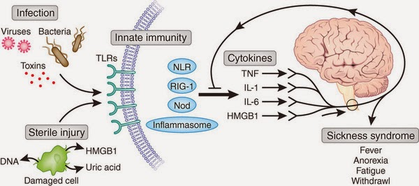 ( Cytokines in Disease - Image Courtesy of biologicalexceptions.blogspot.com )