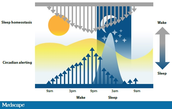 ( Circadian Rhythm and Sleep Homeostasis - Image Courtesy of www.medscape.org )
